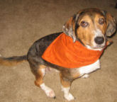 How to make a reversible bandana for your dog or puppy, free sewing pattern.