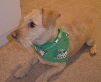 Make a doggy bandana for your pup, here is Gabe's.