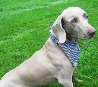 How To Make A Bandana Scarf For Your Dog Sewing For Your