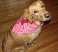 Jypsi modeling her new sewn bandana. Here's the video to see how to sew one.